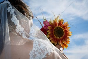 Brides Sunflower against a bright blue sky