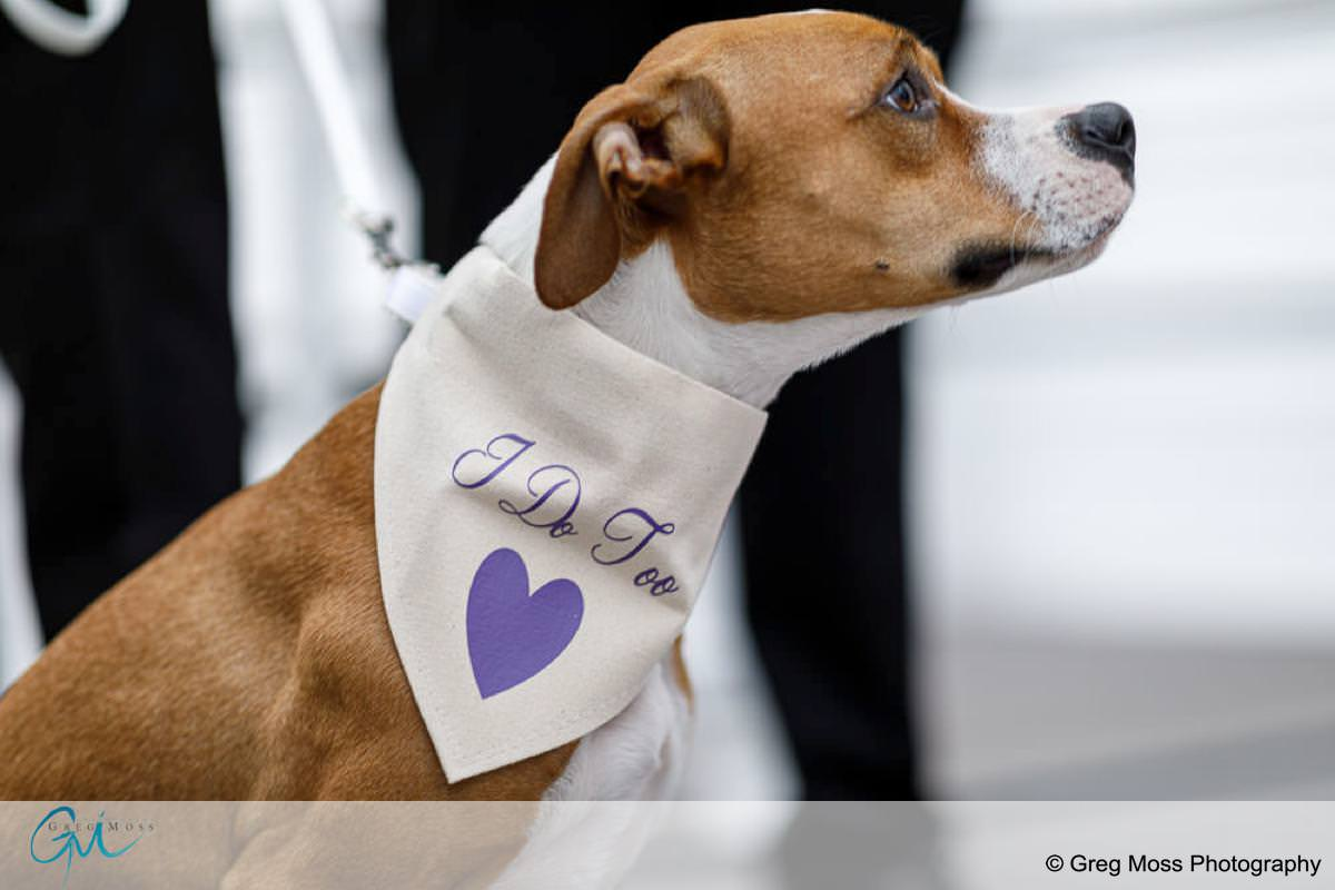 "Puppy with ""I do too"" scarf on during ceremony"