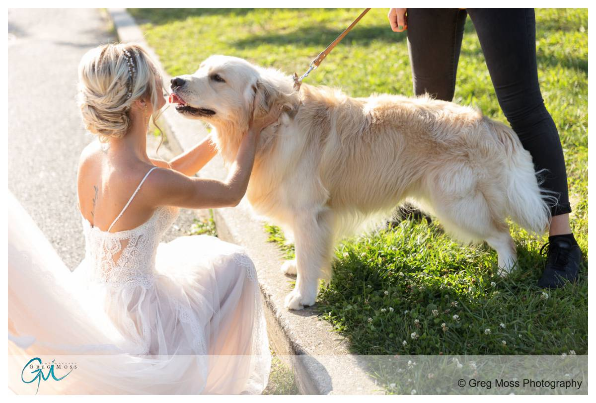Bride with Golden retriever ring bearer